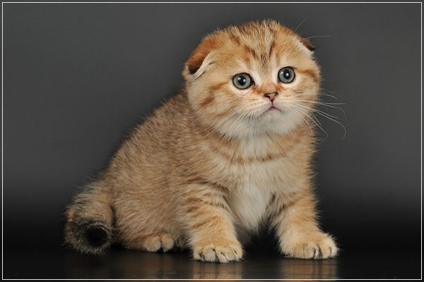 породистые котята фото и цена