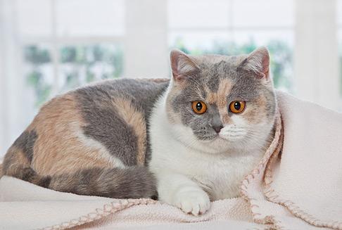 Котята сегодня